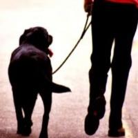 El cuidado de mascotas te abre puertas