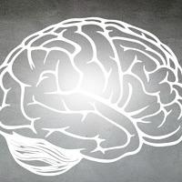¿Cómo funciona nuestro cerebro?